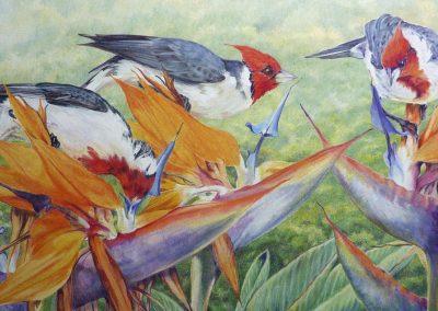 Cardinals. Jackie Cox