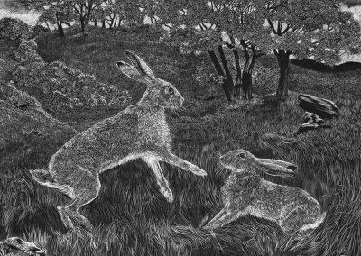 Dancing Hares. Jackie Cox