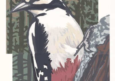 Great Spotted Woodpecker. Chris Sinden