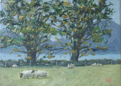 Appin Sheep Farm