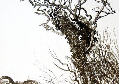 Wind Shaped Tree.